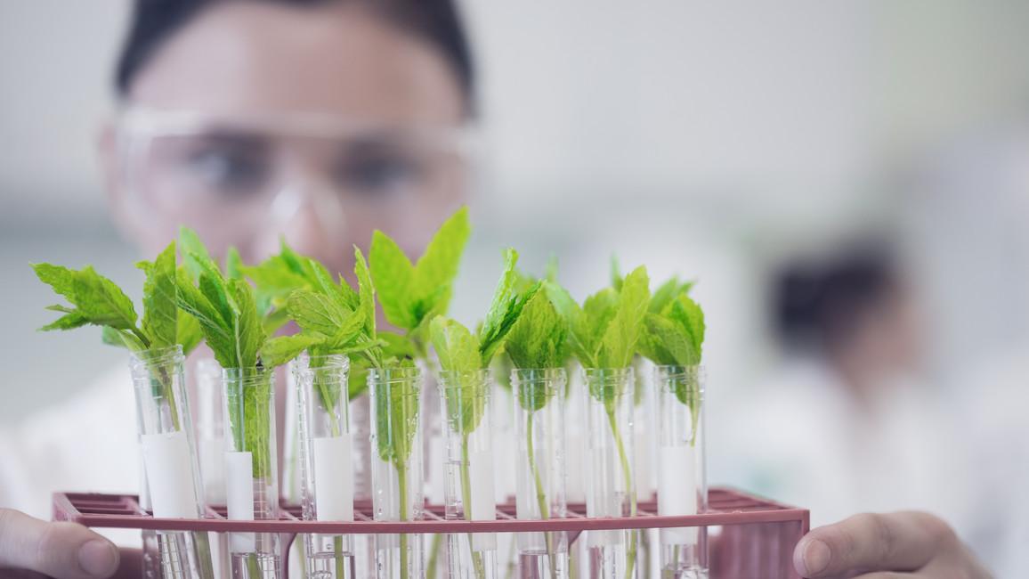 Weibliche Wissenschaftlerin mit Jungpflanzen im Labor