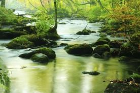 Ein Fluss schlängelt sich durch eine unberührte Landschaft.