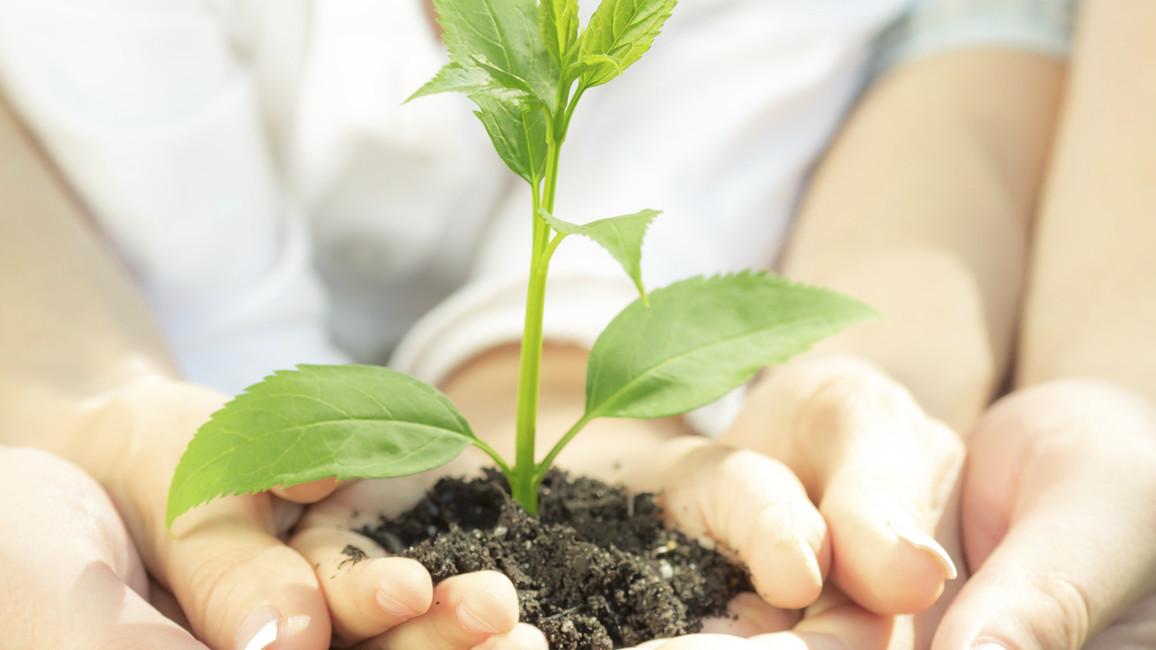Eine junge Pflanzewird in Händen gehalten. (beschnittene Version)