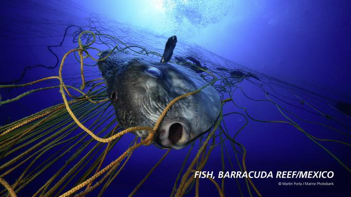 """Im dritten Container geht es darum, was mit Plastik im Meer passiert und wie es die Tierwelt beeinflusst. """"Auf Kinder machen Bilder mit Meerestieren, die sich in Plastik verfangen haben, besonders großen Eindruck"""", beobachtet Julia Schnetzer."""