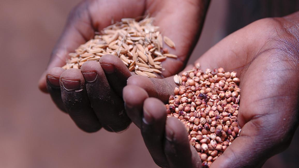 Hände, die Samen halten