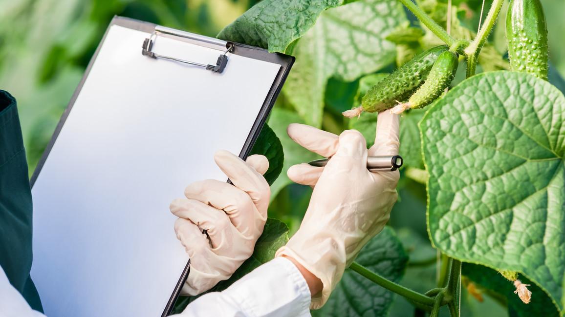Untersuchung von Pflanzen