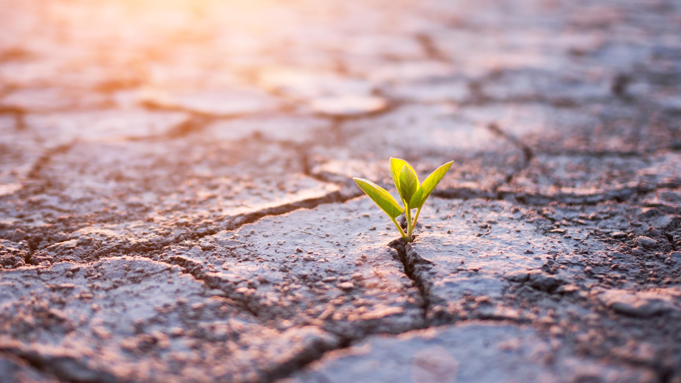 Grünpflanze sprießt in der Wüste