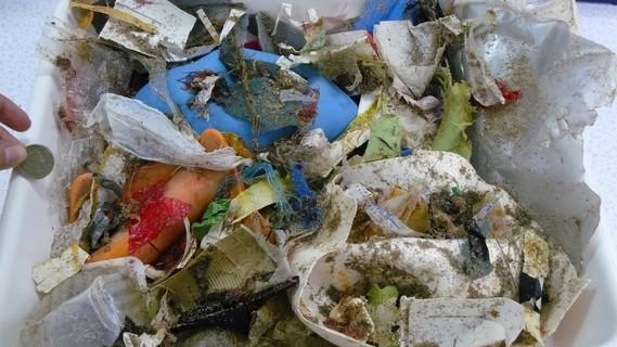 An einem Strand in England sammelte Sonja Oberbeckmann mit ihren Kolleginnen und Kollegen diese Kunststoffteile auf. Wenn Plastik überhaupt abgebaut wird, dann nur sehr langsam. Stattdessen wird es von Wellen und der UV-Strahlung immer weiter zerkleinert, bis es mit bloßem Auge kaum noch zu erkennen ist. Sind die Plastikpartikel irgendwann kleiner als fünf Millimeter werden sie Mikroplastik genannt.