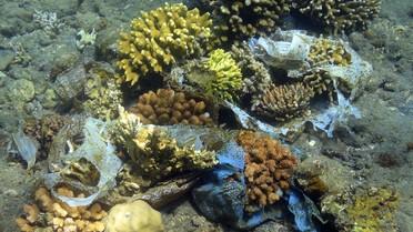 Plastikmuell bedroht Korallen im Korallenriff, Nordbali, Bali, Indonesien