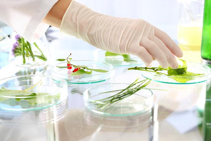Pflanzenproben im Labor
