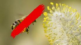 Poster zum Video Forschungsinitiative zum Erhalt der Artenvielfalt