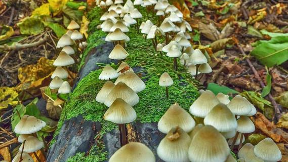 Totholz bietet Lebensraum für Pilze, Käfer und Insekten.
