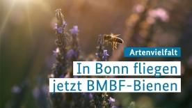 Poster zum Video Artenschutz - BMBF Bienen fliegen in Bonn
