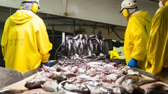 Blick in eine Fischfabrik