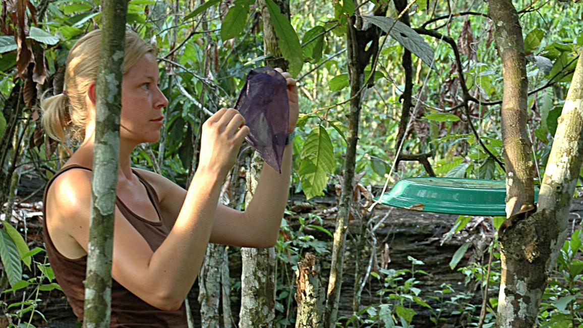 Dr. Sandra Junglen installiert in einer Kaffeeplantage Fallen, mit denen Moskitos eingefangen werden.