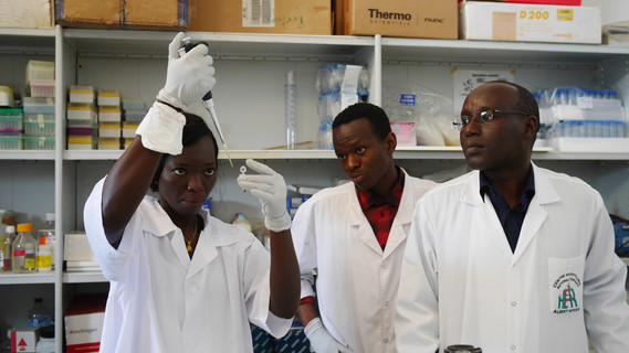 Untersuchung von Malaria-Proben