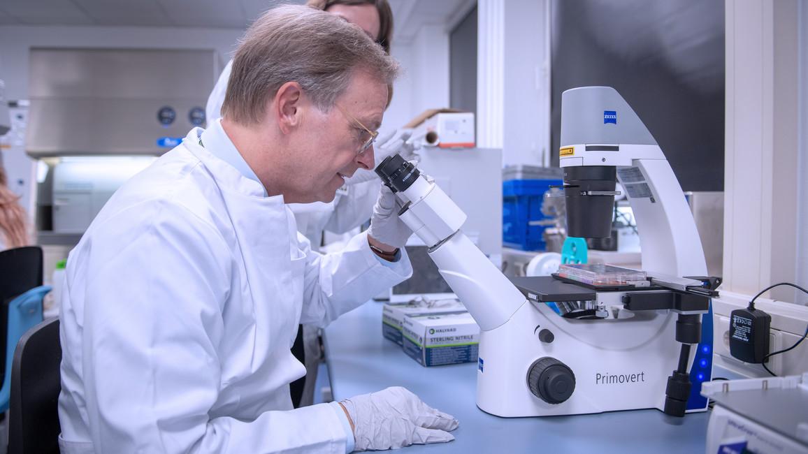 Unter dem Mikroskop ist die Wirkung der Bestrahlung in den Zellen sichtbar.