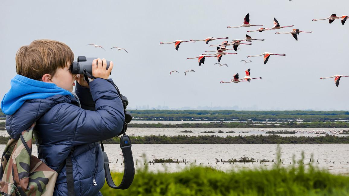 Ein Junge beobachtet mit einem Fernglas Vögel an einem See.
