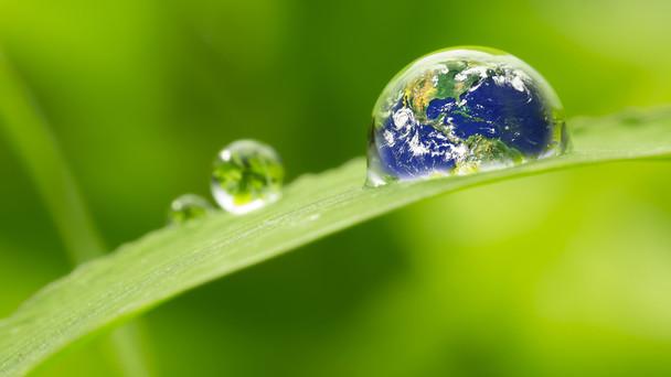 Ein Wassertropfen, in dem die Welt abgebildet ist, perlt von einem Blatt.