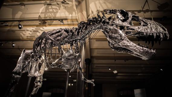 Tristan Otto - die neue Attraktion im Naturkundemuseum Berlin