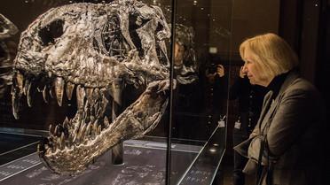 Sonderausstellung T-Rex