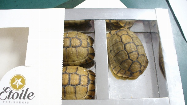In Deutschland wurden in den letzten Jahren jedes Jahr bis zu 2000 Tiere beschlagnahmt, darunter lebende Schildkröten, Warane, Schlangen