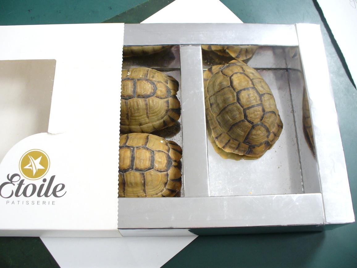 Artenschutz Tierhandel Consul