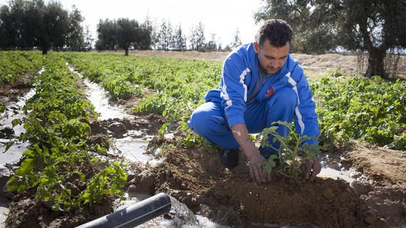 Wasserwirtschaft, Produktion von Oliven und Gemuese durch Bewaesserung, in der Region von Kairouan