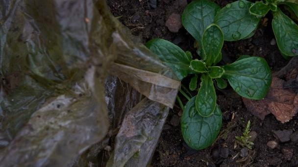 Eine auf Feldern untergepflügte Plastikfolie zerfällt im Boden zu Mikroplastik.