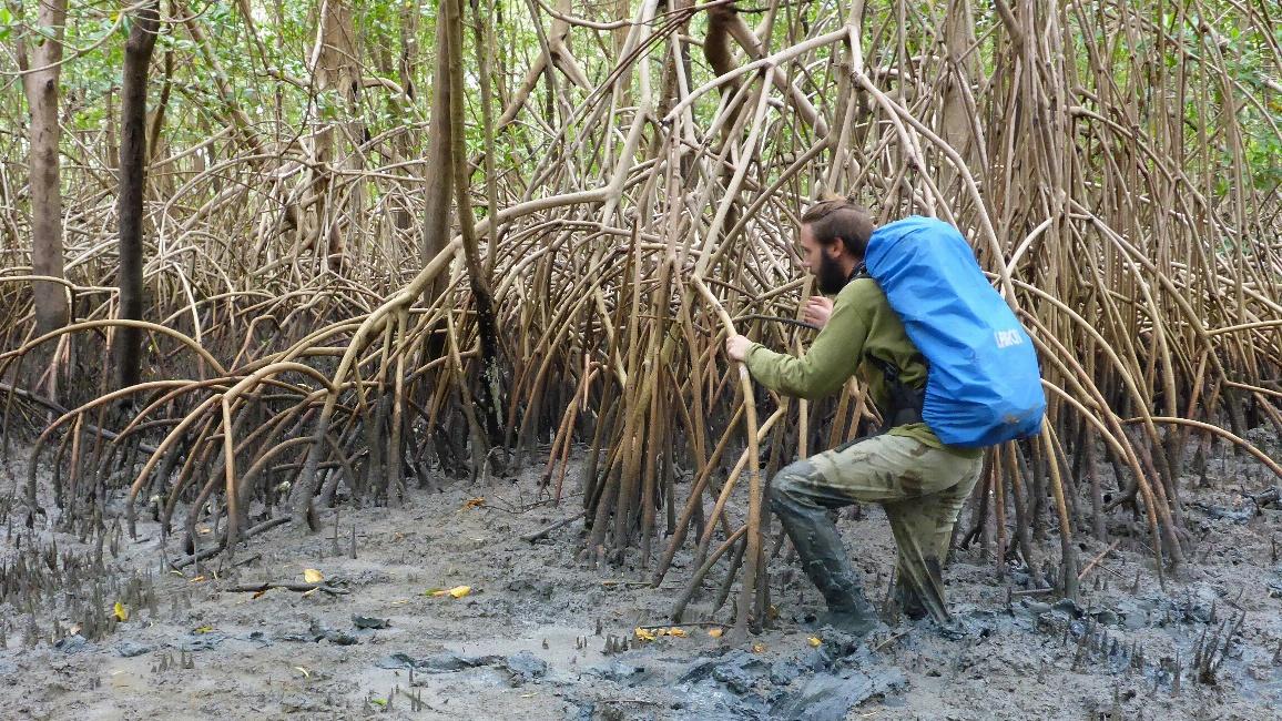 Ein Mann stapft durch tiefe Schlammmassen in einem Mangrovenwald.
