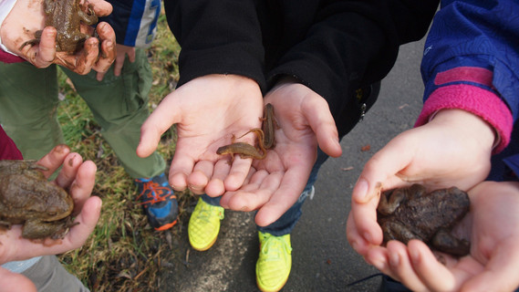 Kinder retten Kröten