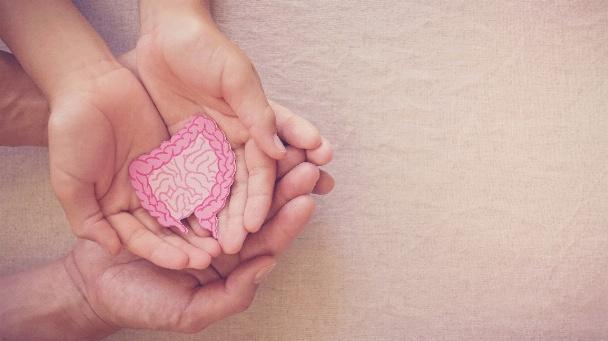 Erwachsene und Kinderhände halten ein Schaubild eines Darms in der Handfläche