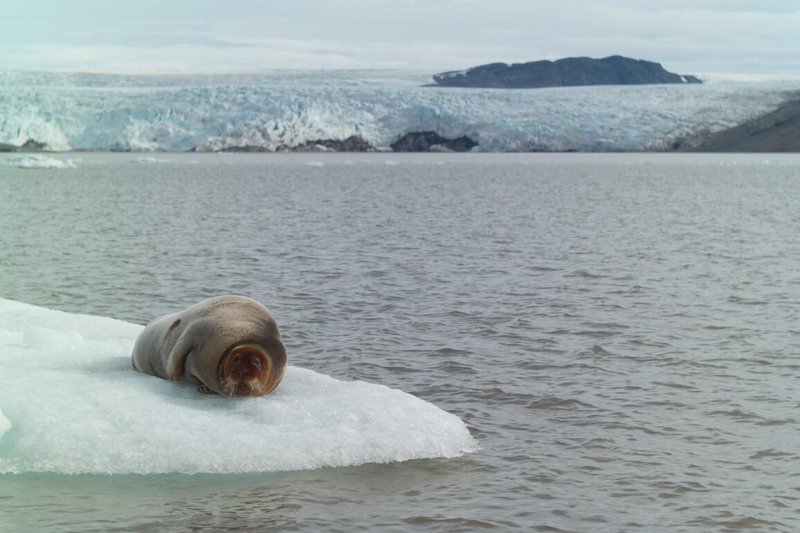 Eislandschaft rund um Spitzbergen