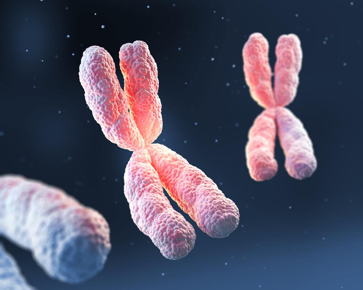 3D X Chromosom