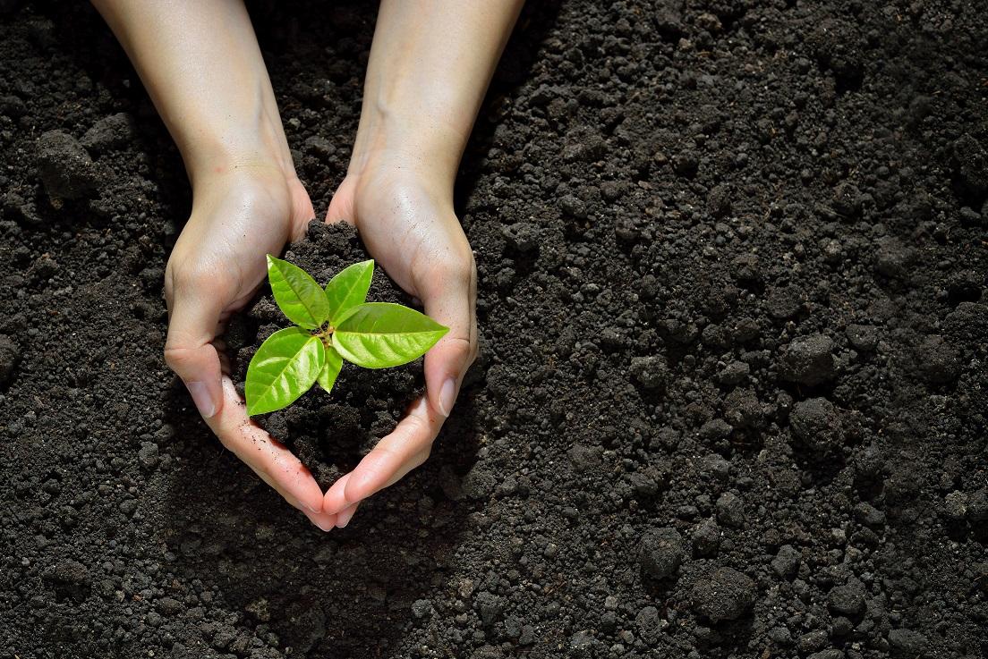 Biobasierte Ressourcen