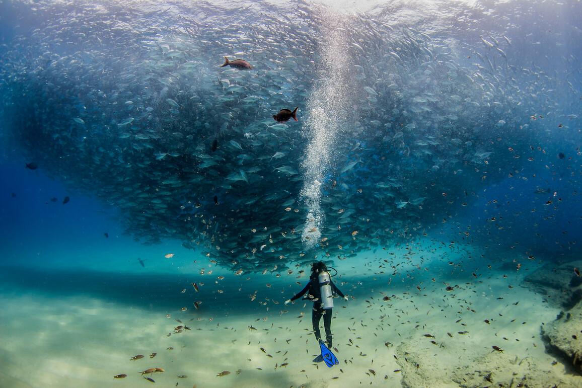 Ein Taucher vor einem großen Fischschwarm im Ozean