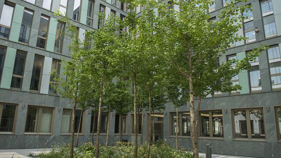 Begrünter Innenhof im Neubau des BMBF am Dienstsitz Berlin