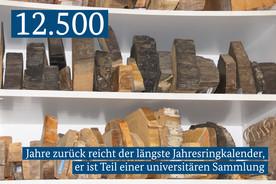 12.500 Jahre zurück reicht der längste Jahresringkalender, er ist Teil einer universitären Sammlung