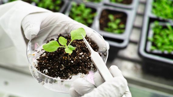 Pflanzen in einem Labor