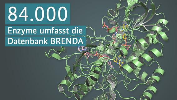 Struktur einer Baeyer-Villinger-Monooxygenase, Enzymicals AG, Greifswald