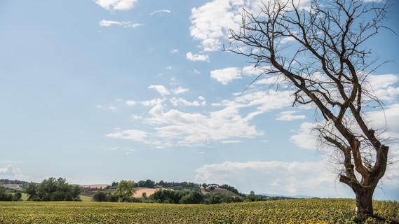 Ein von Trockenheit gezeichnetes Feld im Mittelmeerraum